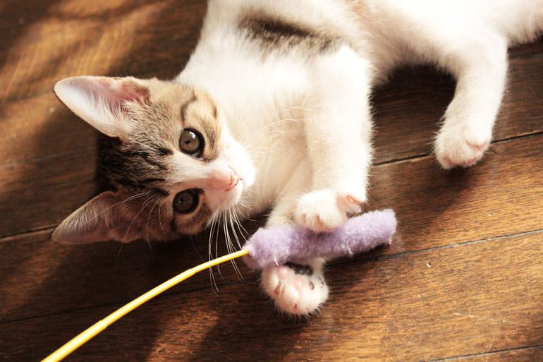 家に猫を迎えたら