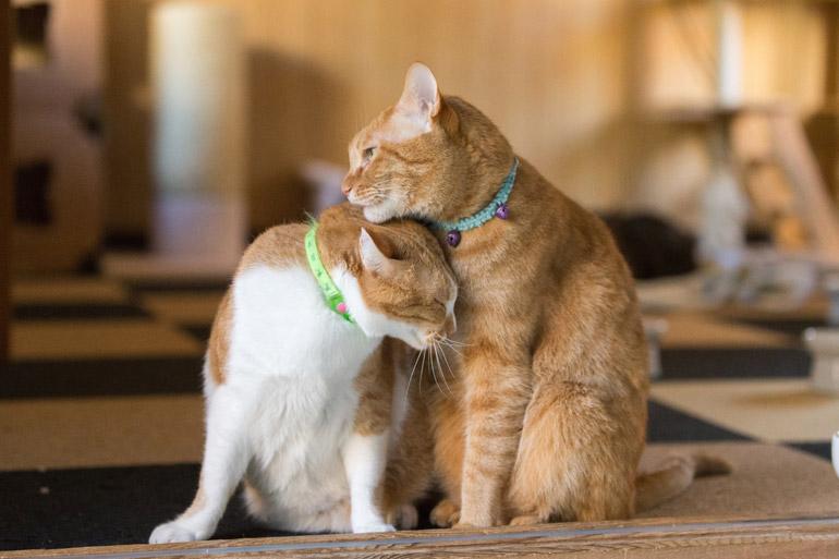 猫の発情と出産について