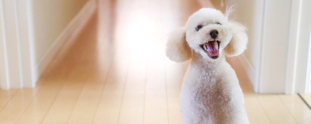 犬の去勢手術