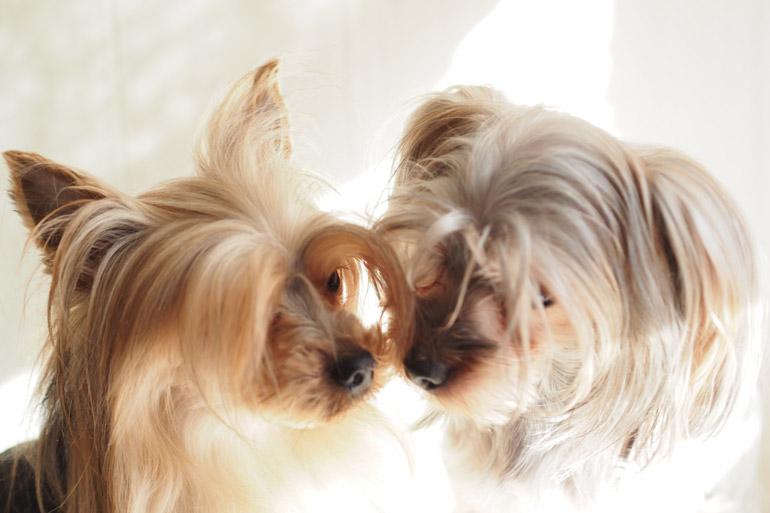 犬の不妊治療